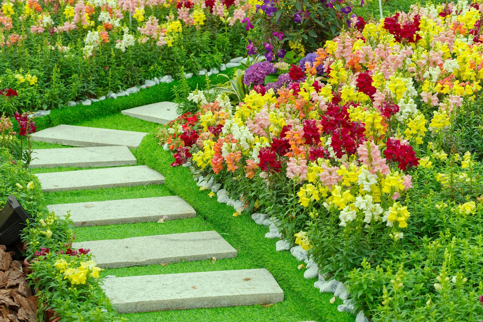 The Most Beautiful Pathway